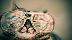 Buongiorno divertente con gatto